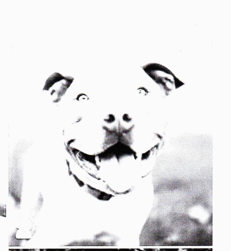 Dogs Public Domain3_0001_NEW_0001