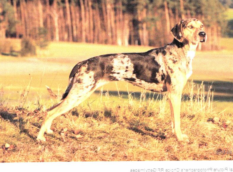 Dogs Public Domain3_NEW