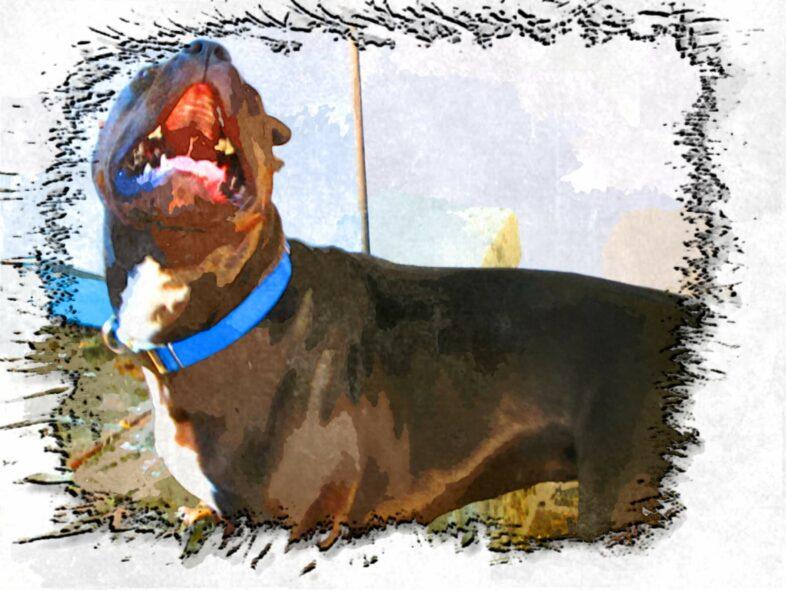 Why Puppies Teeth