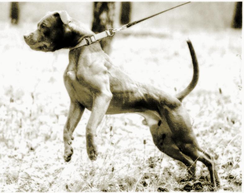 Stop Choking Your Dog