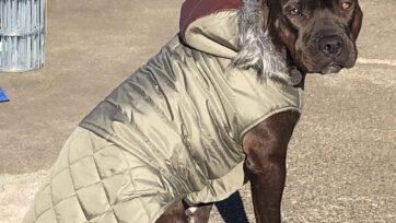 Brezzy's jacket 2