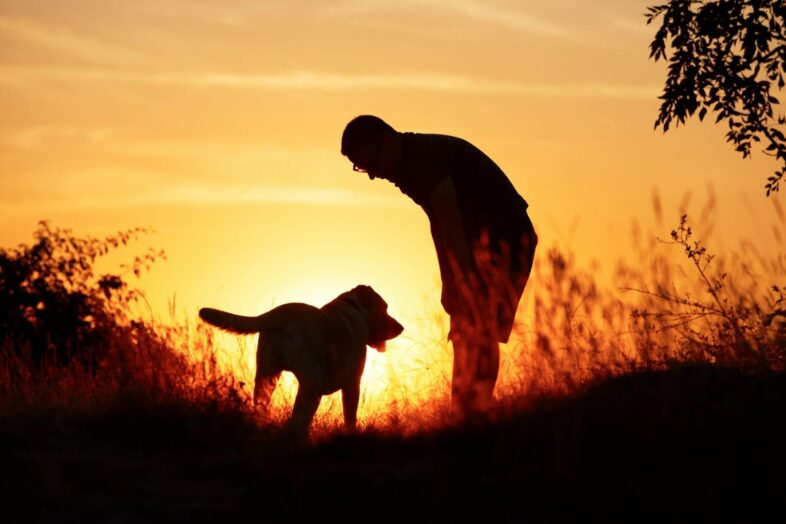 Image Your Life Without Your Dog