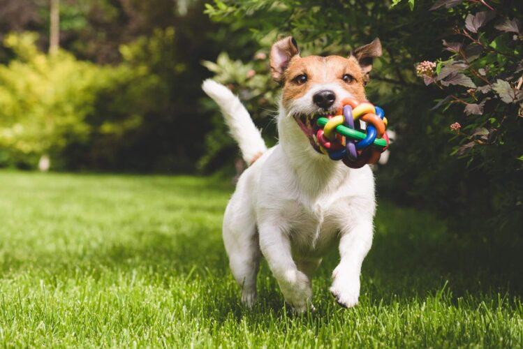 Dog Diseases
